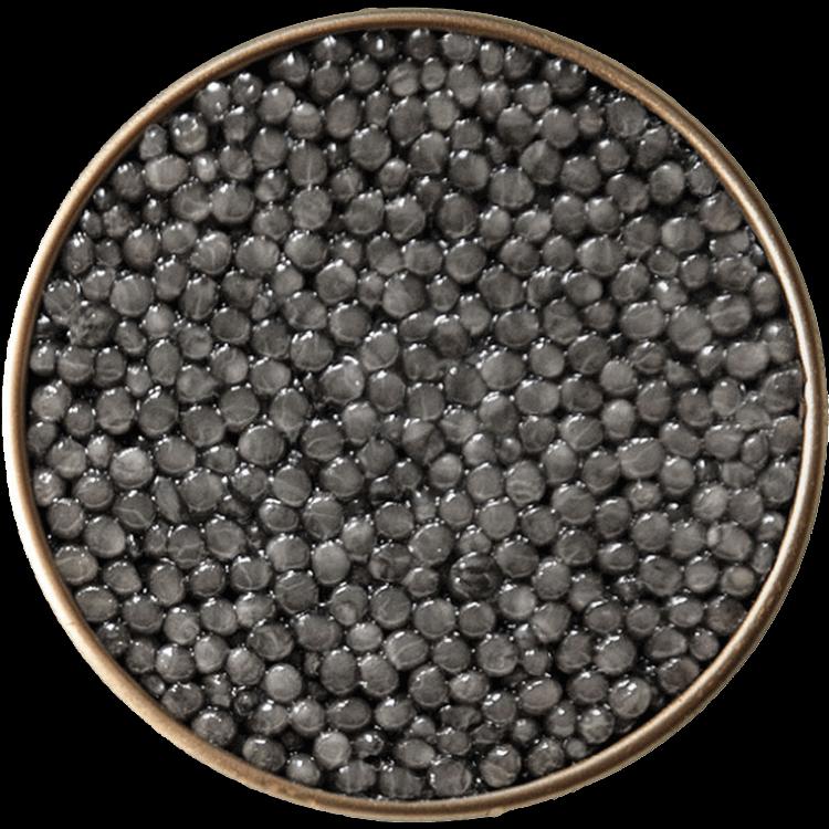 BELUGA Kaviar 30-500 Gramm -HUSO HUSO